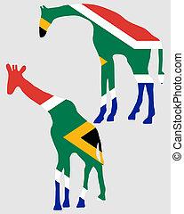 girafes, à, drapeau, de, afrique sud