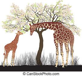 giraff, och, träd