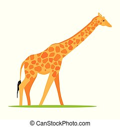 giraffa, animale, africano