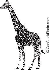 giraffa, nero bianco, vettore