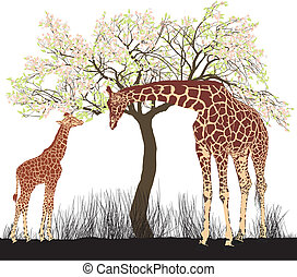 Giraffe and tree - vector illustration of young and old...