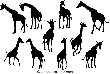 Giraffe Animal Silhouettes - A high quality giraffe animal...