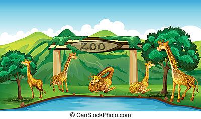Giraffe at the