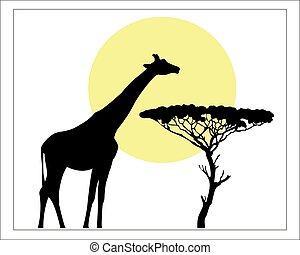 Giraffe black silhouette Savannah