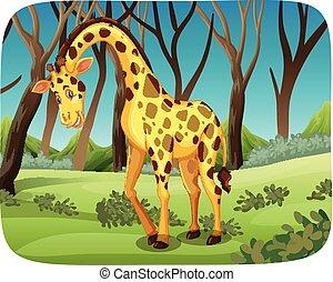 giraffe, bos