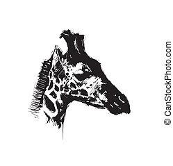 giraffe - sketching of the giraffe