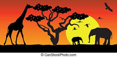 giraffe, en, olifanten, in, afrika
