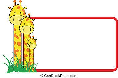 giraffe family copyspace2 - giraffe family copyspace in...