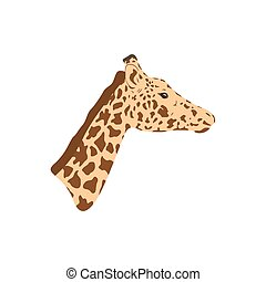 Giraffe head and neck. Part of the animal.