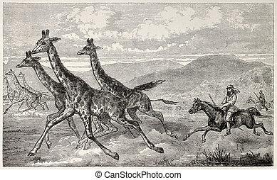 Giraffe hunting - British explorer sir Samule Baker huntin...