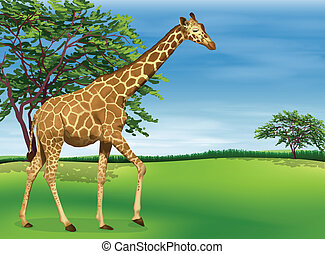 Giraffe - Illustration of a giraffe