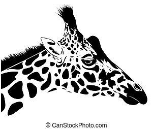 Giraffe - illustration of giraffe head in line art style