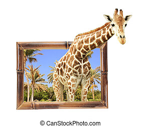Giraffe in bamboo frame with 3d effect. Isolated on white...