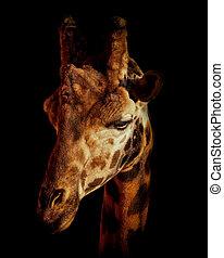 Giraffe in black