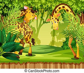 giraffe, in, de, jungle