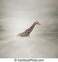 giraffe, in, der, himmelsgewölbe