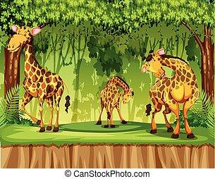 Giraffe in nature scene