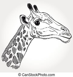 giraffe isolated black contour on white background. Sketch, hand-drawn.