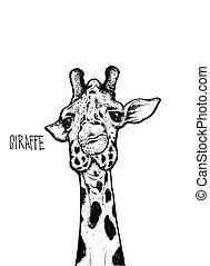 giraffe isolated illustration on white background