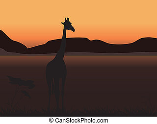 Giraffe on a background of sunset