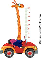 Cheerful funny giraffe on car. Height chart or meter wall or wall sticker. Childrens vector illustration with scale from 50 to 120 centimeter to measure growth. Growing chart