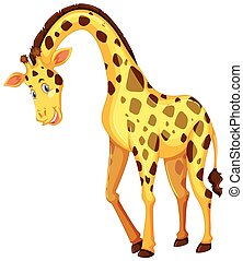 Giraffe on white background