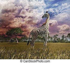 giraffe, ondergaande zon