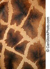 Giraffe real skin background pattern texture