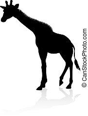 giraffe, safari, dier, silhouette