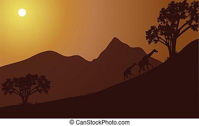 giraffe, silhouette, hügel