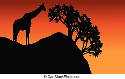 Giraffe silhouette in cliff scenery