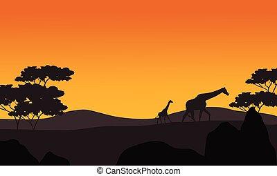 Giraffe silhouette in park scenery