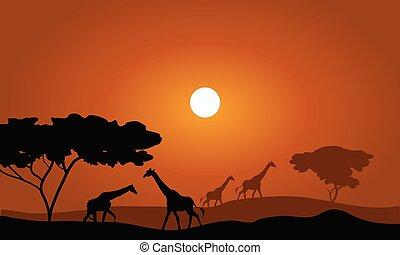 Giraffe silhouette savanna landscape