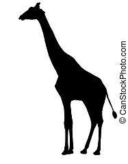 giraffe, silhouette