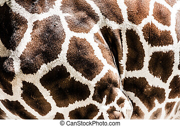 Giraffe skin background