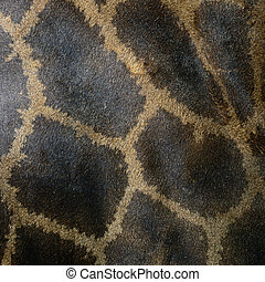 Giraffe skin - Genuine leather skin of Giraffe (Girafta...