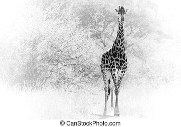 giraffe, solitär