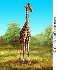 Giraffe - Wildlife: giraffe in its native african...