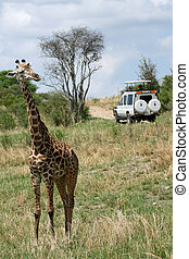 Giraffe - Tarangire National Park - Wildlife Reserve in Tanzania, Africa