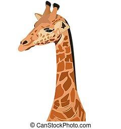 Giraffe - the tallest animal. Part of the animal.