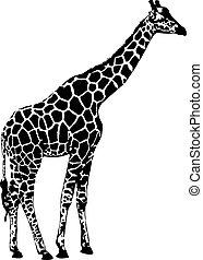 Giraffe, vector illustration