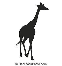 Giraffe vector isolated silhouette