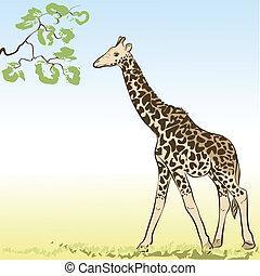giraffe., vektor, ilustrace
