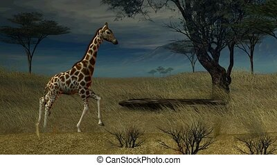 Giraffe Walking Through The Jungle