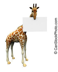 Giraffe with sign