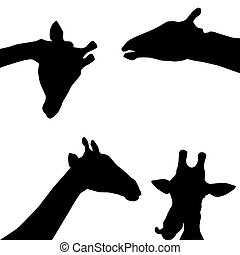 giraffes black silhouette on white background. vector