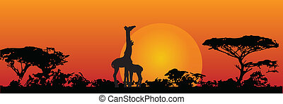 Giraffes in the savanna - The nature of the savannah. ...