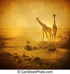 giraffes, ouderwetse , beeld, amboseli, park, kenia,...
