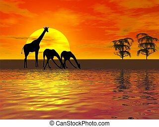 giraffes silhouette - sunset with giraffes silhouette