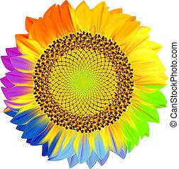 girasol, con, arco irirs, petals.